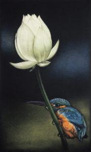 Hasunikawasemi